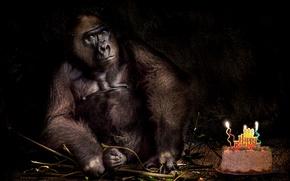 Picture birthday, holiday, monkey, cake