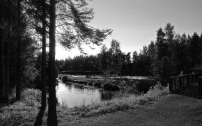 Picture forest, trees, bridge, pond, river, white, Black, the threshold