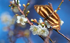 Picture macro, branches, butterfly, spring, flowering, flowers, drain