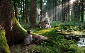 Picture forest, rays, stream, deer, Girl, observation