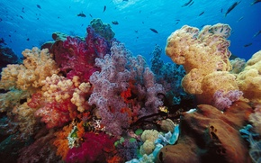 Wallpaper corals, Indonesia, fish