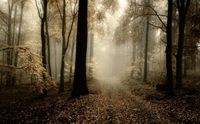 Picture autumn, forest, leaves, trees, fog, trail