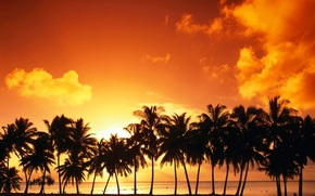 Picture clouds, sunset, Palm trees