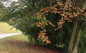 Picture trees, leaves, fall, path, foliage, Autumn, autumn, trees, track