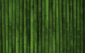 Picture green, plant, Japanese bamboo