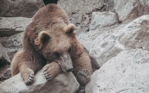 Picture animal, bear, zoo