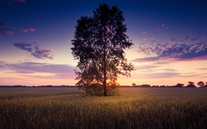 Picture greens, field, the sky, leaves, the sun, clouds, trees, landscape, nature, background, tree, widescreen, Wallpaper, …