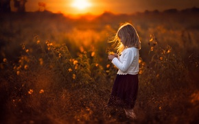 Picture field, the sun, sunset, girl, flowers
