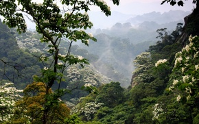 Picture forest, mountains, fog, flowering