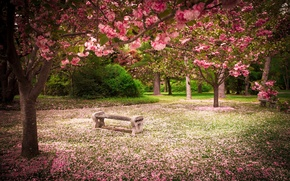 Picture nature, Park, beauty, spring, flowering trees
