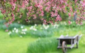 Picture flowers, cherry, blur, branch, cart, pink petals
