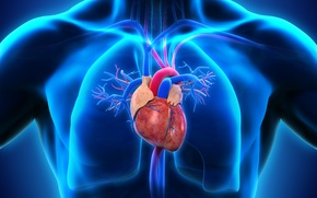 Picture heart, man, medicine, lungs