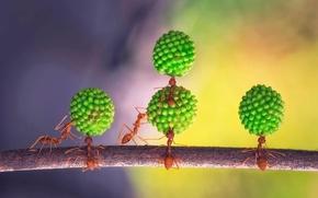 Picture ants, team, acrobatic