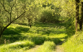 Picture greens, forest, summer, grass, the sun, trees, Germany, Bayern, path, Regenstauf