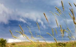 Wallpaper Meadows, Trova, Clouds
