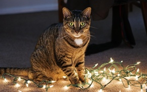 Picture garland, look, sitting, cat, Kote