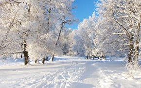 Picture the sky, snow, trees, winter