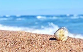Picture sand, sea, sink, shell, Sunny