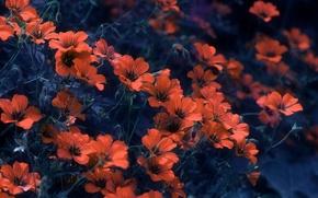 Picture background, petals, flowers, bokeh