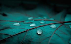 Picture drops, macro, sheet, green, Rosa