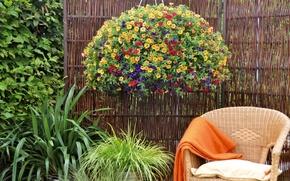 Wallpaper flowers, chair, stay, garden, the bushes, calibrachoa