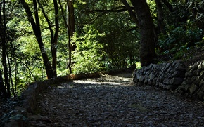 Picture stones, foliage, trail, spring, garden