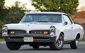 Picture white, tree, muscle car, classic, Coupe, Pontiac, GTO, 1967, the front, Pontiac, Muscle car, Tempest, …