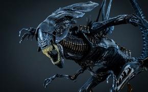 Picture Stranger, Carol, alien king maquette