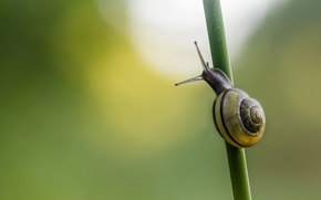 Picture background, snail, a blade of grass