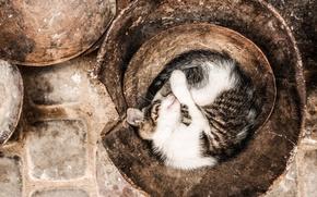 Wallpaper colors, cat, sleeping, pot