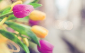 Picture focus, yellow, blur, tulips, pink, bokeh