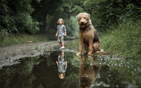 Picture dog, boy, puddle