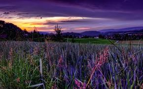 Wallpaper field, the sky, sunset