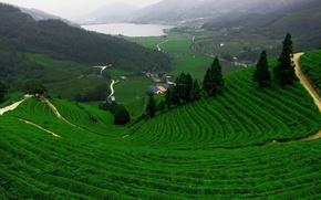 Picture road, field, mountains, lake, tea, plantation