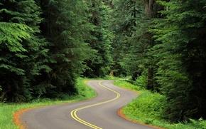 Wallpaper trees, turn, 151, Road