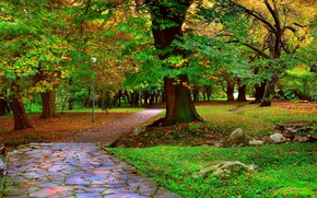 Picture trees, Park, Autumn, track, alley, falling leaves, trees, nature, park, autumn, leaves, path, fall
