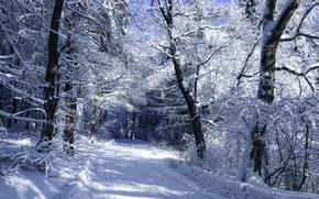 Picture winter, frost, road, forest, snow, trees