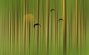 Picture birds, style, background, color