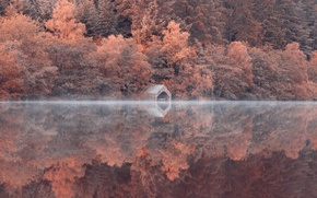 Picture forest, trees, lake, reflection, slope