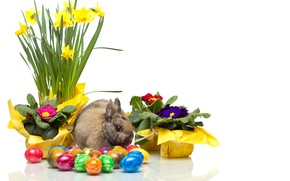 Picture flowers, egg, rabbit, Easter, Narcissus, easter