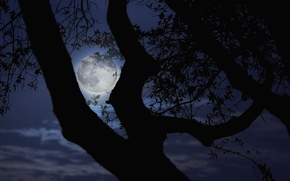Picture night, branches, tree, the moon