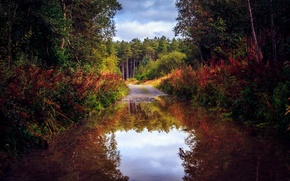 Picture puddle, reflection, nature, road, trees, water, autumn, forest