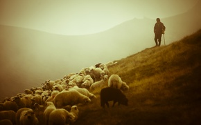 Wallpaper animals, beauty, mountains, landscapes, sheep, sheep, shepherd, Shepherd, shepherd