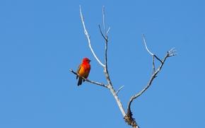 Picture bird, branch, blue sky, wildlife, weaverbirds