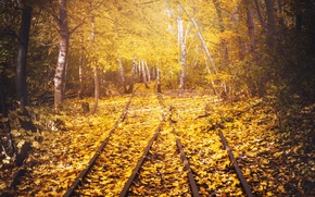 Picture road, autumn, leaves
