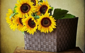 Picture sunflowers, flowers, basket