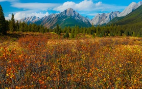 Picture autumn, forest, the sky, grass, leaves, trees, mountains, meadow, Canada, canada, alberta, banff national park