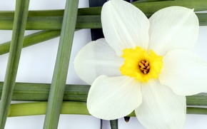Picture flower, flowers, mesh, yellow, green, white petals, steibel