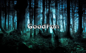 Picture forest, night, GoodFon