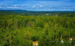 Picture greens, forest, summer, green, Nature, panorama, summer, forest, nature, panorama